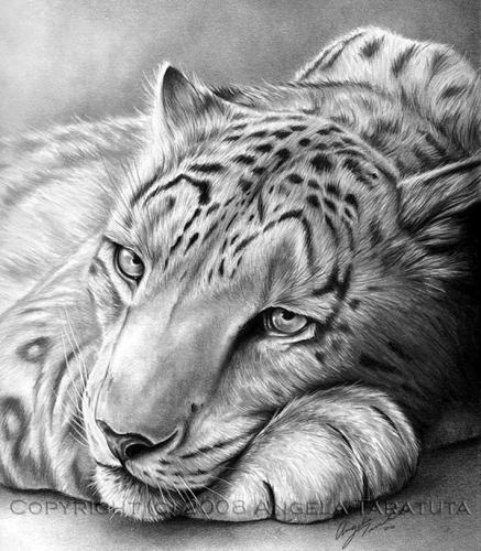 Realistic-Animal-Pencil-Drawings-27